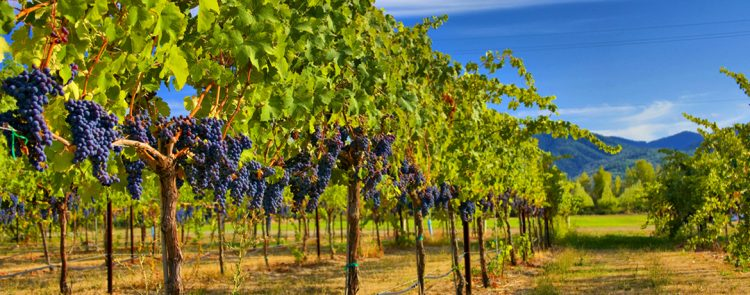 Winery simulation